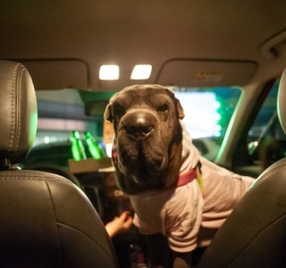 Drive-in com os pets